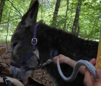 Foto von einem Esel