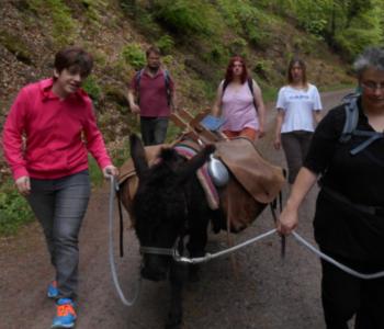 Denise führt einen Esel