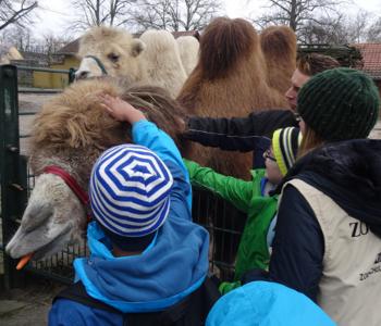 Kinder streicheln ein Kamel