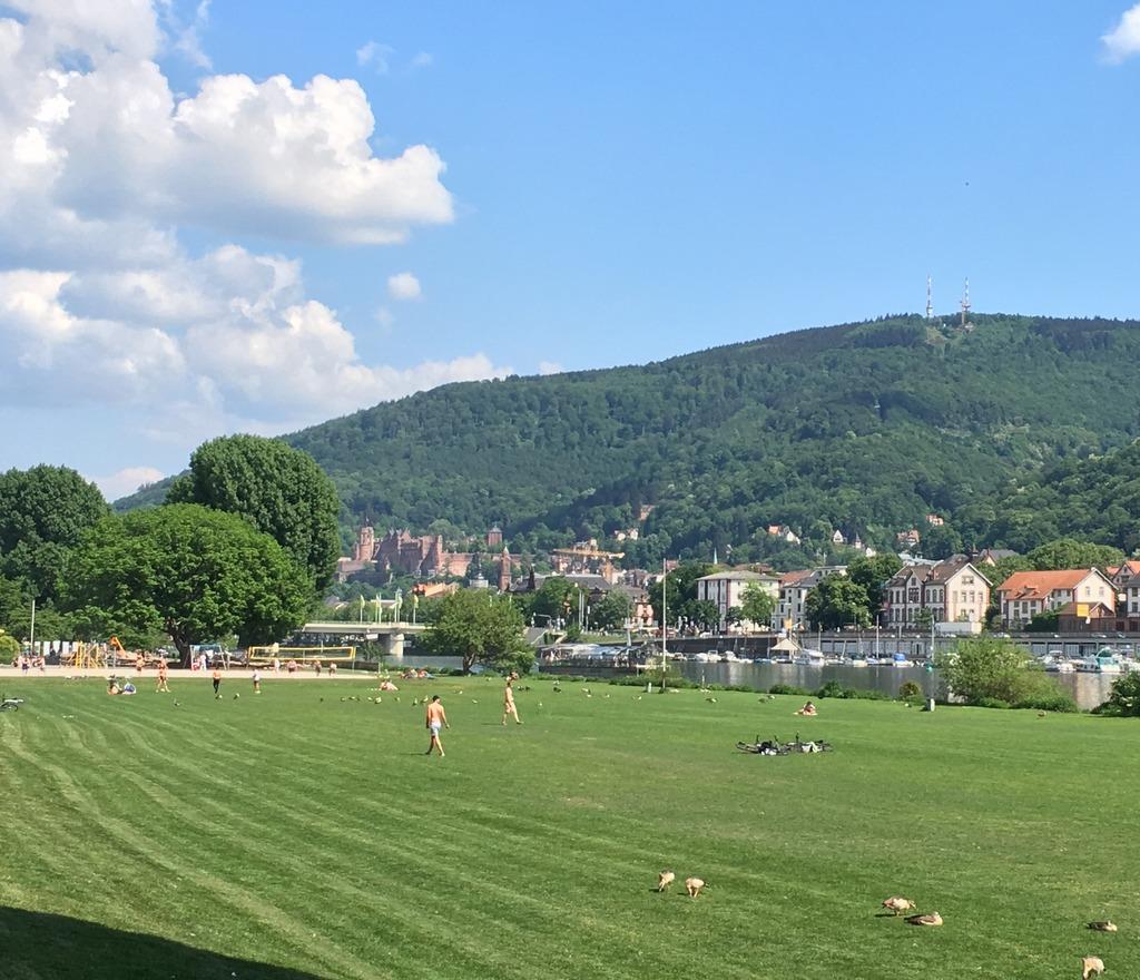 Neckarwiese und Schloss