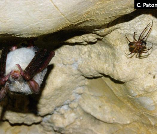 Fledermaus und Spinne