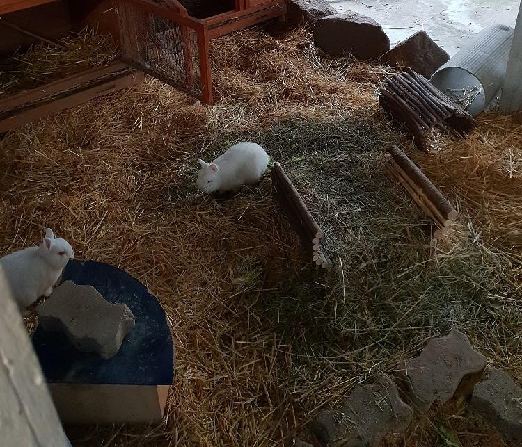 Kleintiere im Tierheim