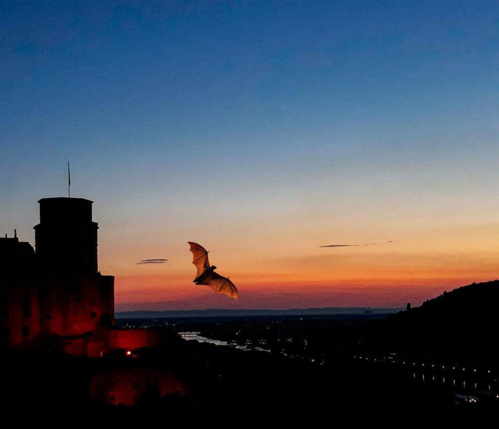 Schloss Heidelberg mit Fledermaus
