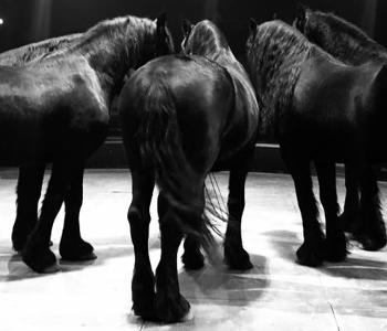 Pferde im Zirkus