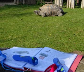 Vorlesestift und Schild vor dem Gehege der Schildkröte
